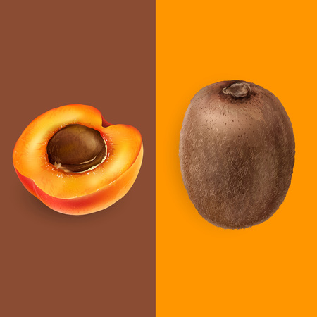 Apricot and kiwi illustration