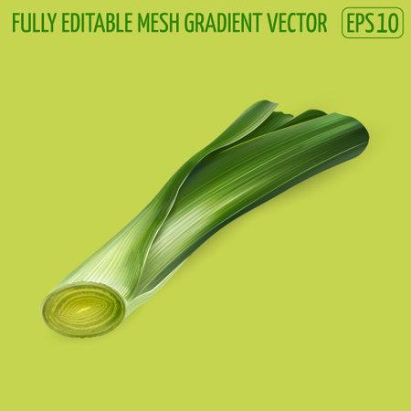 Fresh green leek illustration on green background.