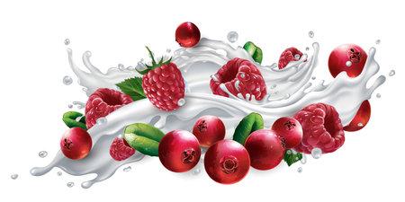 Cranberries and raspberries in a milk or yogurt splash. Zdjęcie Seryjne