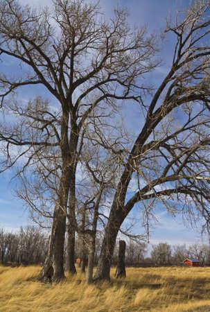 majestic prairie tree on farm land