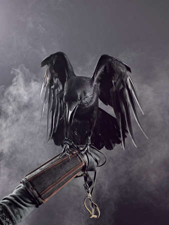 mystique: Big Black Raven in the smoke Stock Photo