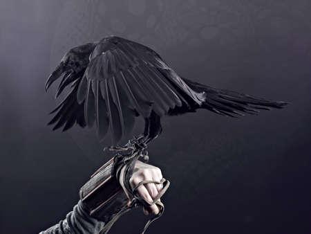 mystique: Big Black Raven on the black