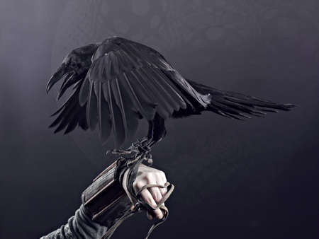 Big Black Raven on the black