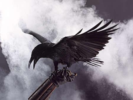 corvo imperiale: Big Black Raven nel fumo