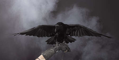 Big Black Raven in the smoke Banque d'images
