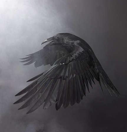 Big Black Raven in the smoke Foto de archivo