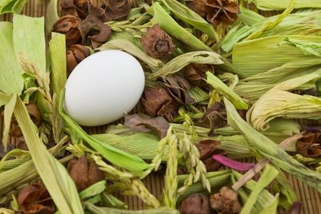 brushwood: Lonely white egg among brushwood