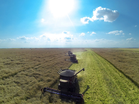 harvesters: Combine harvesters on colza field. Aerial view by a drone