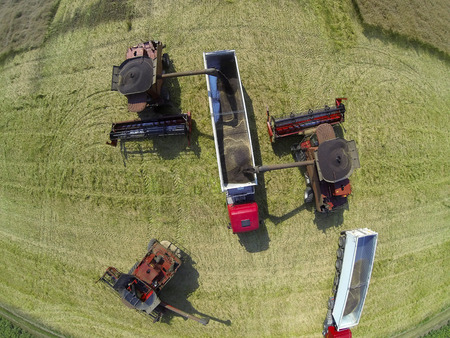 harvesters: Combine harvesters on colza field. Aerial view