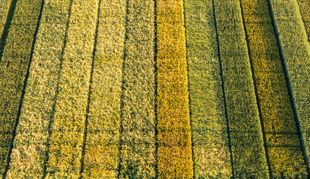experimental: Several wheat varieties in different colors on an experimental culture seen from above by a professional drone Stock Photo