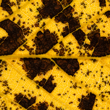 Leaf texture pattern in yellow and brown colors for autumn season