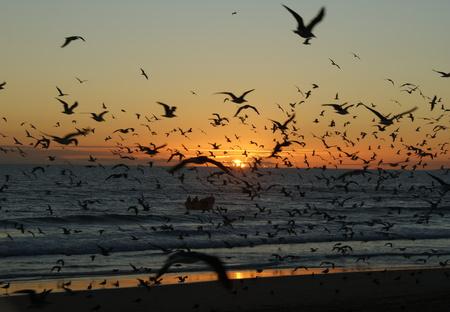 Seagulls in Caparica