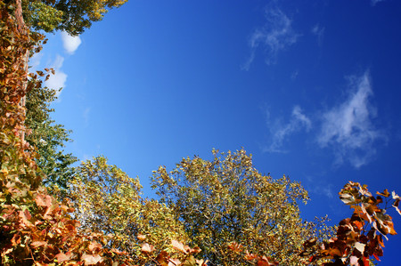 Autumn trees over blue sky