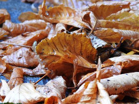 Wet autumn floor Stock Photo