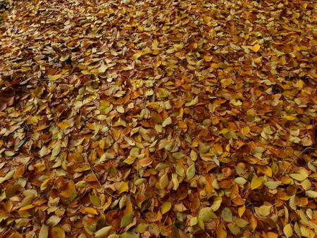 Soil of poplar and alamo leaves Stock Photo