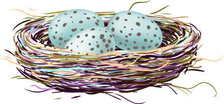 robin bird: Bird s nest with robin eggs
