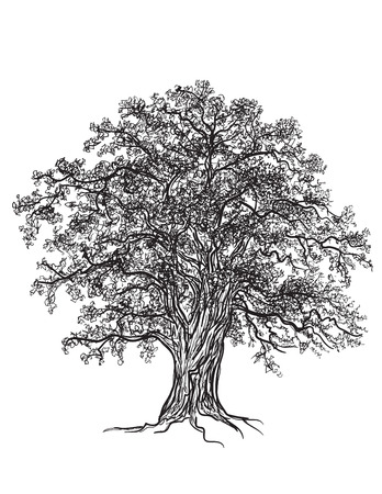 Czarny i biały dąb z liśćmi narysowany ilustrator