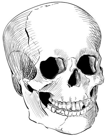 Inciso cranio umano