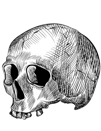 Engraved human skull  Drawn with illustrator Ilustração