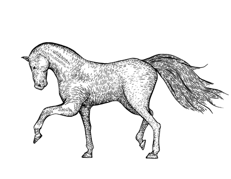 horses in the wild: Engraved vintage horse