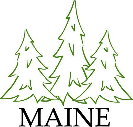 長い needleshaped が集積している常緑針葉樹の葉します。多くの種類家具およびパルプのため広く用いられている柔らかい木材の成長またはタールおよ