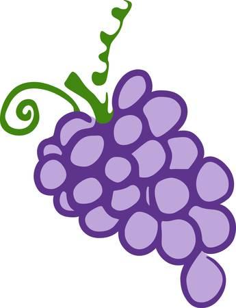 verde y morado: una baya normalmente verde morado o negro que crece en racimos sobre una vid comido como frutas y utilizados en la elaboraci�n del vino recoger esos dise�os de la concordia Vectores