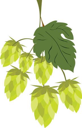 Hop is het belangrijkste ingrediënt dat bier lekker pick maakt deze ontwerpen uit Concord Collecties. Stock Illustratie