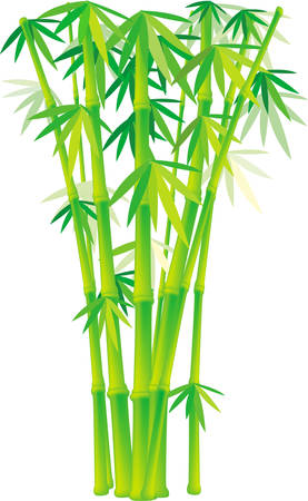 A cool and shady bamboo forest Stretching out to the sky. Pick those designs by Concord