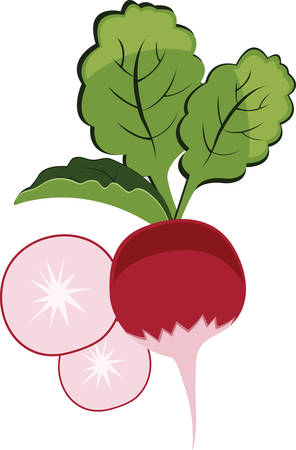 Radishes make perfect springtime finger food. Have this designs by Concord Ilustrace