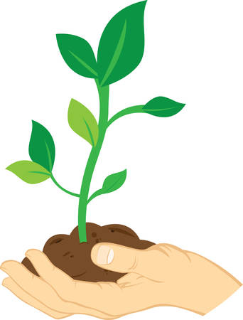 A young tree with a slender trunk is known as a sapling . Pick those design by Concord. Ilustração