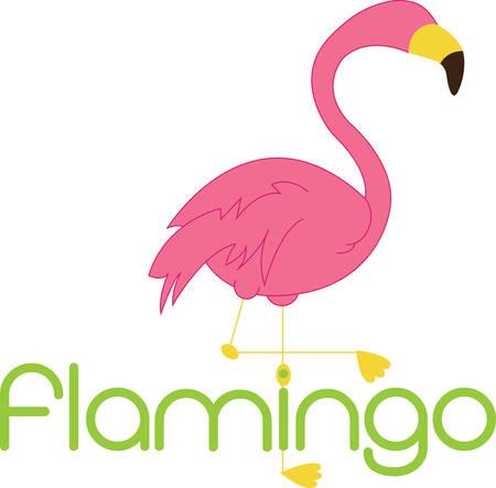 cormorant: Best fabulous flamingo friends forever Illustration