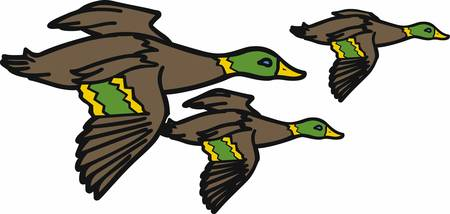mallard duck: Ducks inspire us with the love which they have. grab these designs from concord collections Illustration