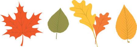 feuillage: Autumn tree Assorted part pour le feuillage d'automne d�coration. Illustration