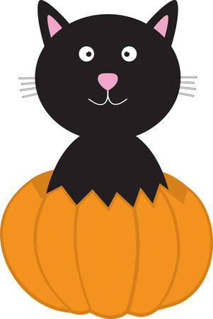 A black cat is a great Halloween decoration.