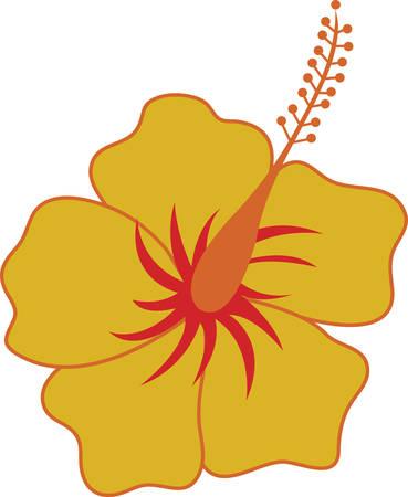 adorn: Flor del hibisco maravillosa manera encantadora de adornar tus proyectos favoritos. Vectores