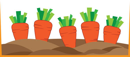 tapering: A tapering orangecoloured root eaten as a vegetable pick those designs by concord Illustration