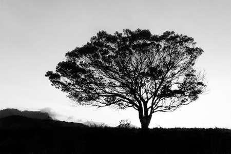 bw: tree (bw)