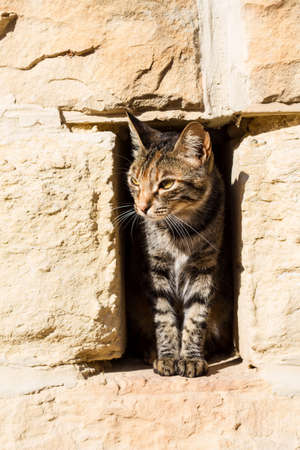 A cat looking from a hole in the wall.  photo