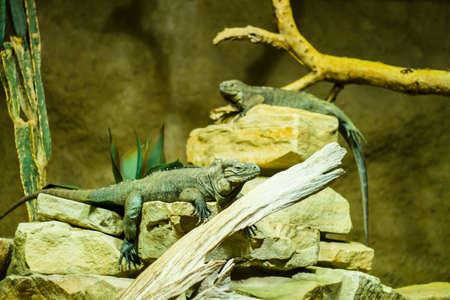 reptiles: Exotic reptiles in a terrarium