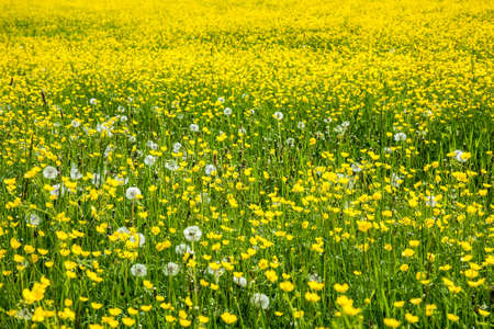 wild flowers: Field covered with wild flowers