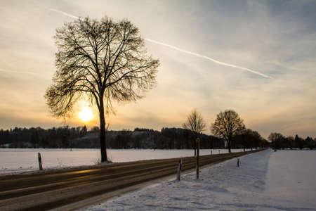 snowy field: A snowy field at sunset