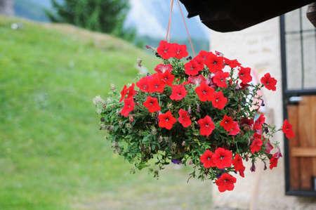 alto adige: Red flowers, Trentino Alto Adige, Italy