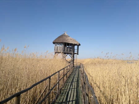 bird watching: A wooden passage to a bird watching hut surrounded by reed