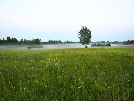 An early evening fog settling on a meadow in Latvian countryside
