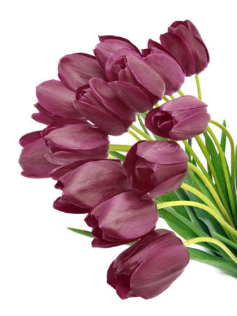 Bouquet of tulips on a white background Stock Photo