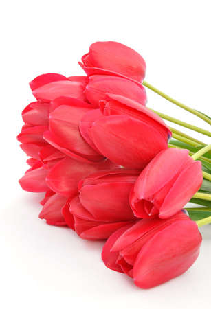 Bouquet of tulips on a white background photo
