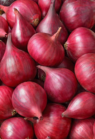 Red onions close up