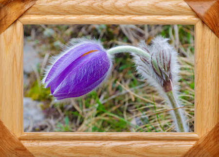 Picture of spring flower in a wooden frame