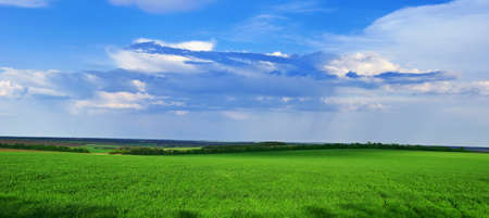 Spring grass grows on the field against a blue sky and storm clouds photo