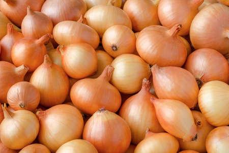 cebolla roja: Cosecha de cebolla amarilla Primer plano